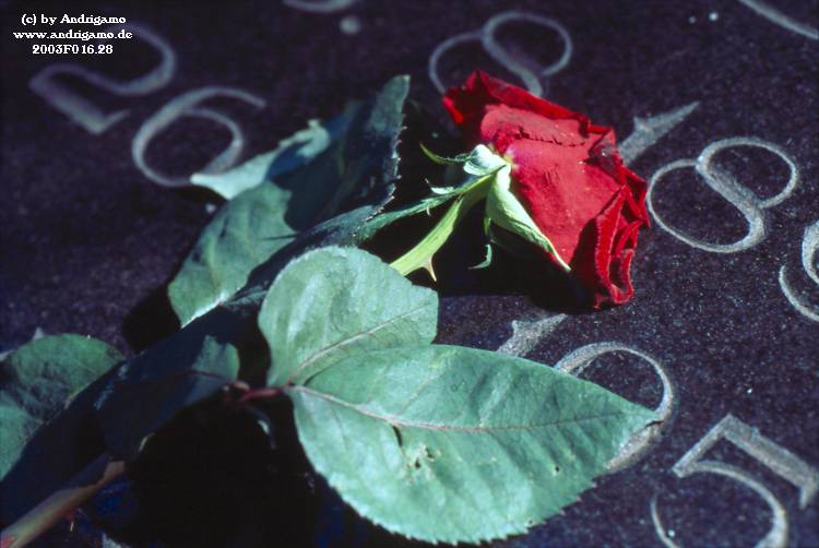 Rose on a grave - Photo by Andrigamo